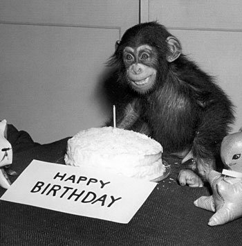 Even the monkey is happy about the Crayon Physics Deluxe birthday sale